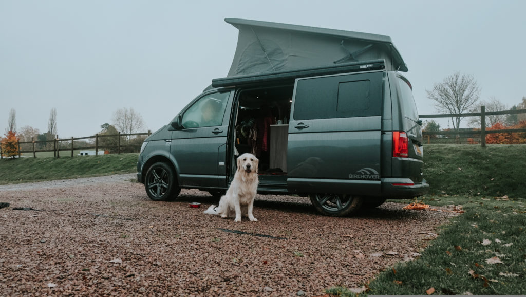 suffolk campervan with a happy dog